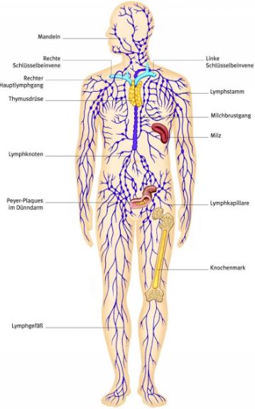 Lymphsystem - Gaby Pinezich